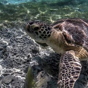 Perfeccion  Natural by Jose Maria Vidal Sanz - Animals Sea Creatures ( sea, natural, animal )