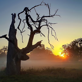 by Tomasz Marciniak - Nature Up Close Trees & Bushes