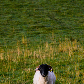 What ye looking at? by Stevie Toye - Animals Other (  )