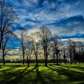 Darley Park by Stuart Lilley - Landscapes Prairies, Meadows & Fields ( sky, park, trees, landscapes, landscape, shadows,  )