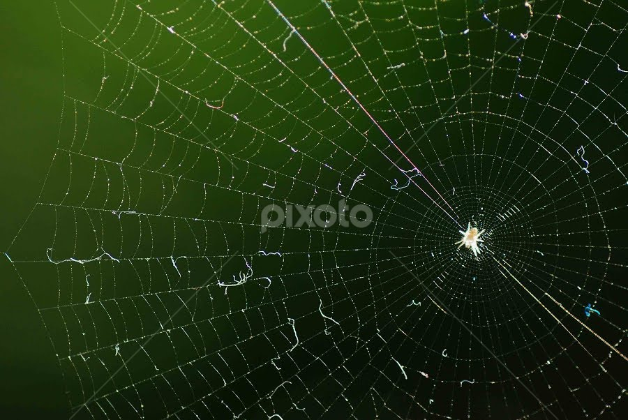 the web by Ripan Biswas - Abstract Fine Art ( macro, nature, wildlife, spider, web )