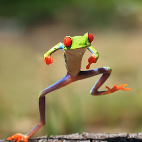 Gangnam style by Shikhei Goh II - Animals Amphibians