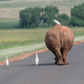 Good bye. by Pax Bell - Animals Other Mammals ( save the rhino, nature, rhinoceros, rhino,  )