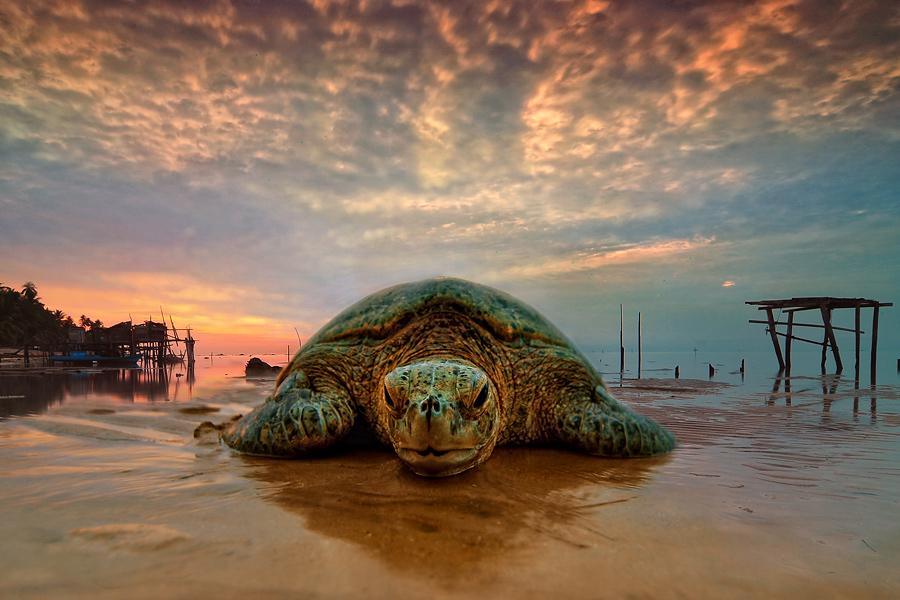 by Ramon Wel - Animals Amphibians