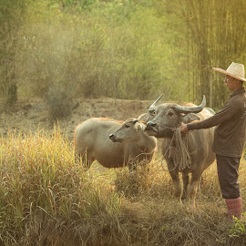 Farmer Thailand with Buffalo by Sutiporn Somnam - People Family ( laos, holding, little, beauty, long, cute, hat, asian, curly, farmer, hands, family, happy, lifestyle, cambodian, asia, lovely, cheerful, hair, animal, buffalo, grass, green, beautiful, leisure, happiness, field, female, background, healthy )