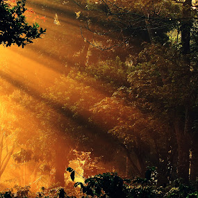 forest Beams by Dhruv Ashra - Nature Up Close Trees & Bushes ( beams, trees, forest, morning, sun rays,  )