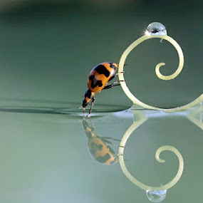 Bugflections by Teguh Santosa - Animals Insects & Spiders ( macro, reflection, bugs )