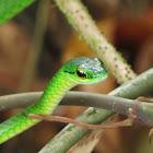 Lora snake