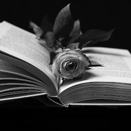 rose and book by Mona Martinsen - Artistic Objects Still Life