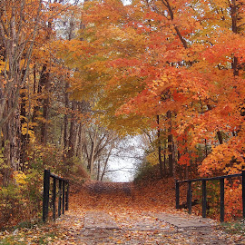 Autumn Bliss by Dana Wigton - Landscapes Forests ( fall colors, autumn, path,  )