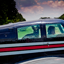 Ready for takeoff by Myra Brizendine Wilson - Animals - Dogs Portraits ( belgian malinois, dogs, airplanes, airplane, brown dog, plane flying, lake, black plane, malinois, black mooney, canine, long island air park, belgian shepherd, plane, airplanes flying, nc, roxy and allen, pet, pets, dog )