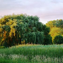 by Beth Bowman - Landscapes Prairies, Meadows & Fields