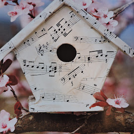 Sing Spring! by Linda McCormick - Artistic Objects Still Life ( nature, bird house, birds, spring, sing spring,  )