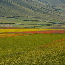 Castelluccio 9 by Bruno Brunetti - Landscapes Prairies, Meadows & Fields ( colors, flowers, italy, castelluccio, fields,  )