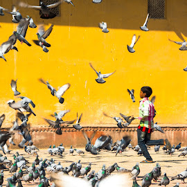 startled by Prabhat Kumar - City,  Street & Park  Street Scenes ( pigeons, children, india, yellow, street photography )