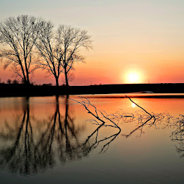 Trees trio.. by Željko Salai - Landscapes Waterscapes