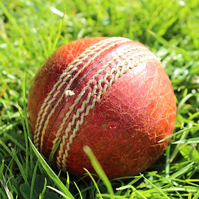 Ball by Kelly Lippitt - Sports & Fitness Cricket ( ball, macro, grass, cricket, sport )