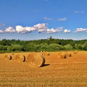 Hay rolls II by Ciprian Apetrei - Instagram & Mobile Other ( mobile photos, hay, summer, brittany, landscape )