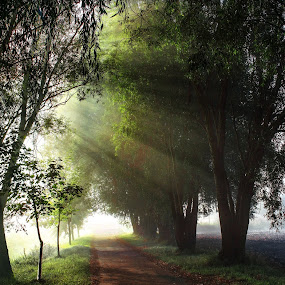 Misty morning 3 by Jiří Valíček - Uncategorized All Uncategorized ( mista, su, morning,  )