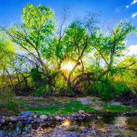 Paradise by Jeana Caywood - Landscapes Deserts ( sabino canyon, desert, creek, tucson, lens flare, mesquite, relax, tranquil, relaxing, tranquility )