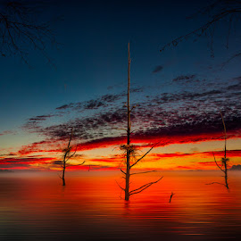 Misty Horizon Sunrise by Eugene Linzy - Landscapes Sunsets & Sunrises ( clouds, water, dead trees, trees, lake, nests, sunrise, mist )