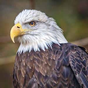 eagle-2.jpg