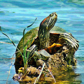 When You're Smiling by Tommy Fisher - Novices Only Wildlife ( happy, turtles, smiles )