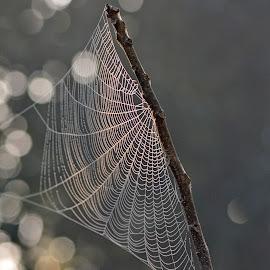 by Bhaskar Patra - Nature Up Close Webs