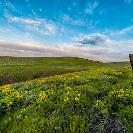 Dalles Mountain Ranch by Chris Bartell - Flowers Flowers in the Wild ( 2017, oregon, april, landscape )