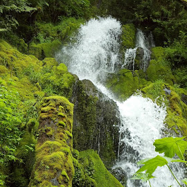 Walking in Olympic National Park 2012 by Gene Richardson - Instagram & Mobile Android