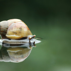 My reflection by Said  Ikhsan - Animals Other ( macro, animals, micro, nature )