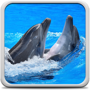 Dolphins Live Wallpaper Online PC (Windows / MAC)