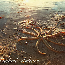 Washed Ashore by Lorna Littrell - Typography Words ( sea and sand, sea life, sunset, starfish, wildlife, beach, typography )