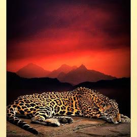 SUNDOWN by Lavonne Ripley - Digital Art Animals