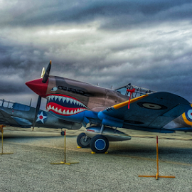 Shark attack at daybreak by Tom Anderson - Transportation Airplanes ( world war 2, 2016 planes of fame air show, calfiornia, curtis p-40 kittyhawk, usaaf, us army air forces, fighter, planes of fame, chino, curtis p-40 warhawk )