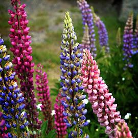 by Todd Klingler - Flowers Flower Gardens