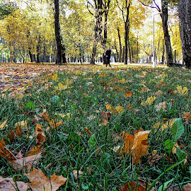 07 by Vygintas Domanskis - City,  Street & Park  City Parks ( green, grass, yellow, city park, autumn, colors,  )