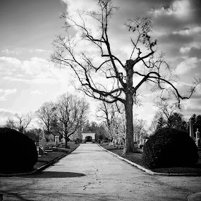 the road to nowhere by Brittany Humphrey - City,  Street & Park  Historic Districts ( old, park, cemetery, town, historic, city )