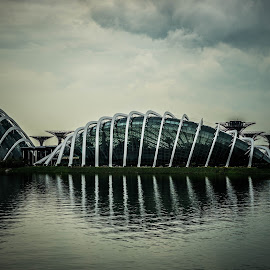GBTB by Mick Wells - Buildings & Architecture Other Exteriors ( reflection, supertree, singapore, biodome )