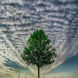 lonely tree by Krešimir Prskalo - Landscapes Cloud Formations ( clouds, sky, tree, nature, green, landscape )