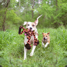 Wait for Me by Samantha Fortenberry - Animals - Dogs Running ( playing, puppies, dogs, nature, rope, cute, running )