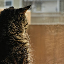Reflection by Tim Day - Animals - Cats Kittens ( cat, reflection, kitten, window, animal )