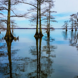 Reelfoot Lake by Holly Stokes - Landscapes Waterscapes ( lake, reelfoot lake, cypress trees, lake view )