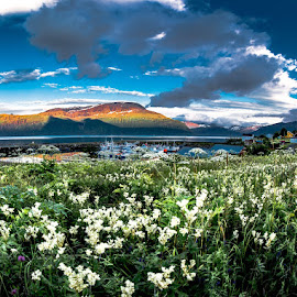 Norwegian summer by Birgitta Hammarkvist - Landscapes Mountains & Hills