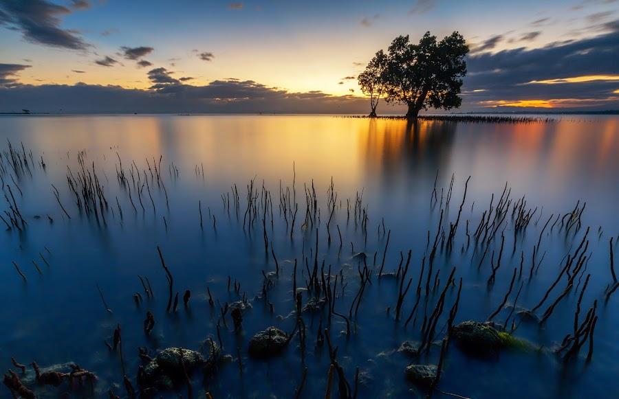The Mangrove Spikes by Raffy Nadayag - Landscapes Sunsets & Sunrises ( lone tree, sunrise, seascape, landscape, mangrove )