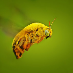 Flying Without you by Setiady Wijaya - Animals Insects & Spiders