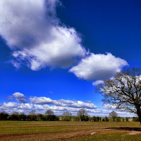 clouds,fields,meadows,tree,landscape by Becky Wheller - Landscapes Cloud Formations