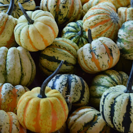 Pumpkins 7 by Keith Heinly - Food & Drink Fruits & Vegetables ( farm, pumpkin, georgia, jasper, burt's )