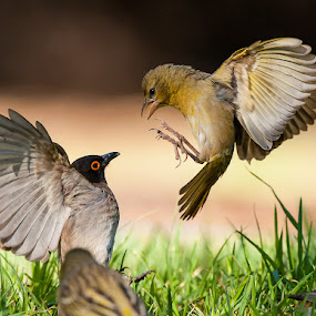 Stand - off by Bridgena Barnard - Animals Birds