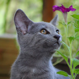 He likes flowers. by Sarah Thomas - Animals - Cats Kittens